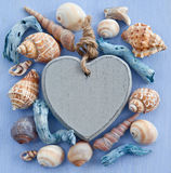 Wooden background with sea shells Royalty Free Stock Photography