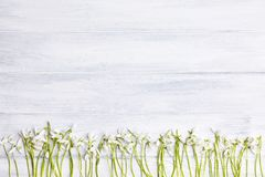 Wooden background with snowdrops frame at the top of a picture stock image