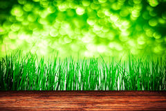 Wooden background. Spring green grass with green bokeh Royalty Free Stock Photography