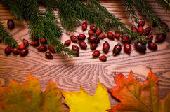Wooden background with spruce needles, rose hips and colorful leaves. On a wooden table, Autumn background Stock Photo