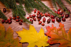 Wooden background with spruce needles, rose hips and colorful leaves. On a wooden table, Autumn background Royalty Free Stock Photo
