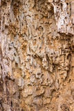 Wooden background with termite holes Stock Image