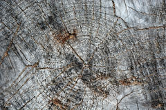 Wooden background. Wooden texture. Picture can be used as a background Royalty Free Stock Photos