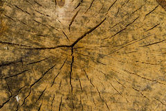 Wooden background. Texture. Tree stump background in the nature eco concept Stock Photo