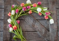 Wooden background with tulips Stock Image