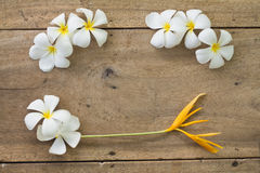 Wooden background with white flowers. Top view old wooden background with white flowers Royalty Free Stock Images