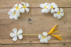 Wooden background with white flowers. Top view old wooden background with white flowers Royalty Free Stock Photo