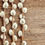 Wooden background with willow Royalty Free Stock Photos