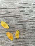 Wooden background. Yellow leaf on aged wooden background royalty free stock images