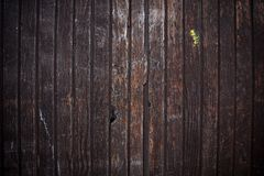 Wooden  backgroung Stock Photos