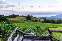 Wooden balcony for scenic of terraced rice field at Ban Pa Bong Piang, Mae Jam in Chiang Mai, Thailand Stock Images