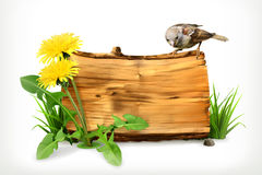 Wooden banner with dandelion and green grass Stock Photography