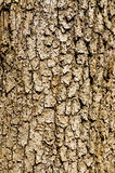 Wooden Bark Royalty Free Stock Image
