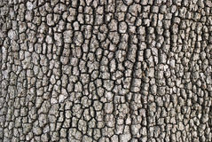 Wooden bark background Royalty Free Stock Image