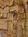 Wooden bark background Royalty Free Stock Images