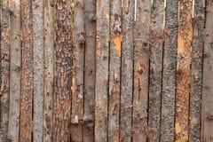 Wooden bark background Stock Photos