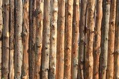 Wooden bark background Stock Image