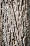 Wooden bark background. Texture of wooden bark on a tree trunk stock photography