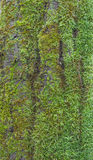 Wooden bark with moss Stock Photos