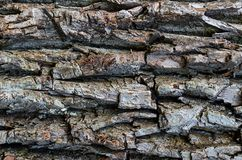 Wooden bark natural weathered pattern with deep cavities horizontal, gray texture. Wooden bark natural weathered pattern with deep cavities horizontal, weathered royalty free stock photo