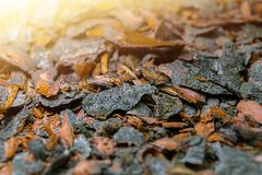 Wooden bark. Removed dried bark from a tree. Close up royalty free stock photography