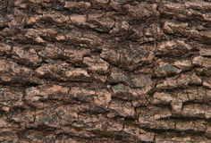 Wooden bark texture Stock Images