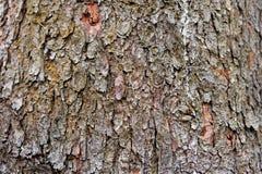Wooden bark texture Royalty Free Stock Photos