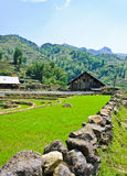 Wooden barn in rice terraced field Stock Image