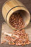 Wooden barrel with beans Stock Images