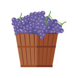Wooden Barrel with Bunches of Red Wine Grape Royalty Free Stock Photography