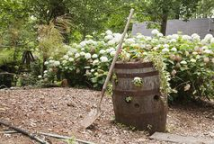 Wooden barrel with flowers and shovel Royalty Free Stock Images
