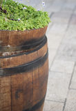 Wooden barrel with plants. Green plants in wooden barrel, urban decorating Stock Photo