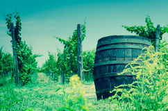 Wooden barrel in vineyard Royalty Free Stock Photography