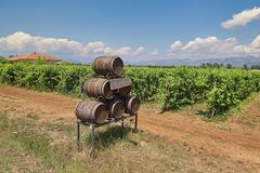 Wooden barrels of wine against the vineyard background royalty free stock image