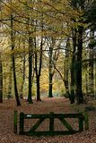 A wooden barrier in an autumn-coloured forest stock images