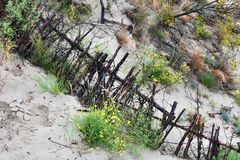 Wooden barriers protect the dunes of the Curonian Spit. Wooden barriers in the dunes of Curonian spit.so the dunes are protected from sand drifts royalty free stock image