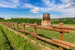 Wooden barrle and green vineyards in Piedmont, Northern Italy. Stock Photo