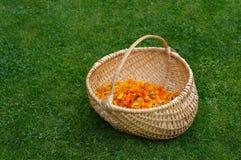 Wooden basket Stock Image