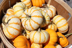 Wooden basket of colorful fall gourds Stock Photo