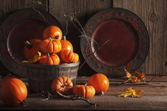 Wooden Basket Filled with Small Pumpkins Royalty Free Stock Image