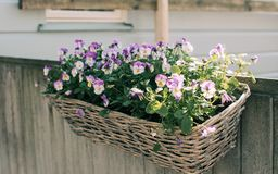 Wooden basket with flowers royalty free stock photo