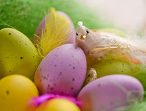 Wooden basket full of colorful eggs and bird Royalty Free Stock Photo