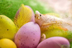Wooden basket full of colorful eggs and bird Stock Photos