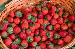 Wooden basket full of fresh strawberries, background from freshly harvested strawberries, directly above. royalty free stock photography