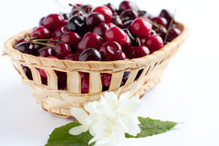 Wooden basket with juicy cherries Royalty Free Stock Photo