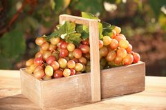 Wooden basket with ripe wine grapes. On table royalty free stock photos