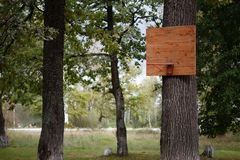 Wooden basketball backboard in a park on a tree. Stock Image