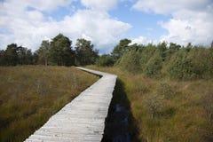 Wooden bat bridge through the swamp Royalty Free Stock Images