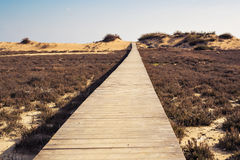 Wooden beach boardwalk path. Brown wooden beach boardwalk path Far away Royalty Free Stock Photo