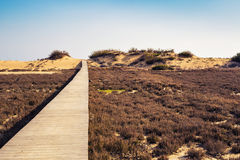 Wooden beach boardwalk path. Brown wooden beach boardwalk path Far away Royalty Free Stock Photos